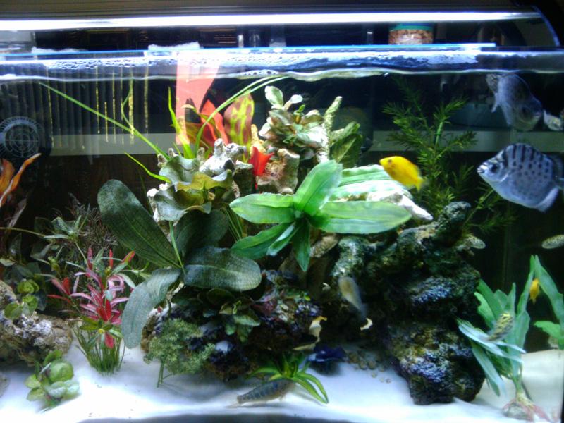 Aquarium City – Tropical Fish Store Los Angeles
